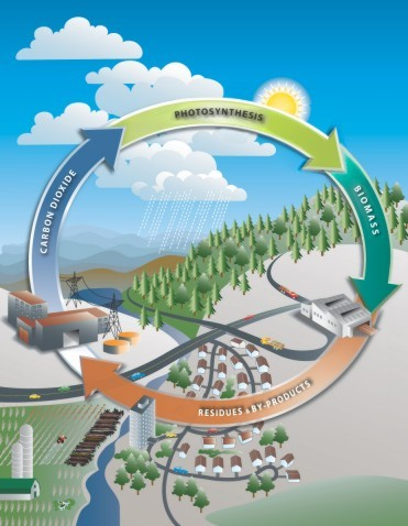 The Carbon Cycle (source: Canbio)